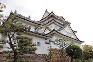 岸和田城の天守閣の写真素材 [FYI03150846]