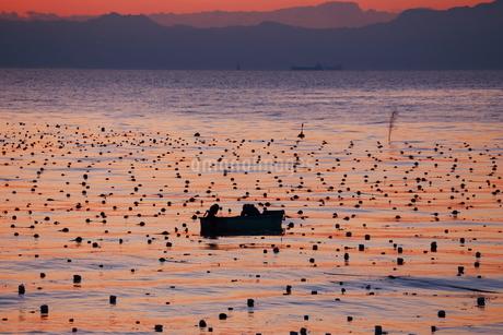 早朝の漁の写真素材 [FYI03151116]