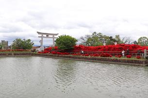 真っ赤なツツジで彩られた参道の写真素材 [FYI03151121]