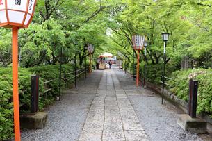 緑の参道の写真素材 [FYI03151122]