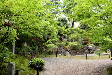 日本庭園の青もみじの写真素材 [FYI03151124]