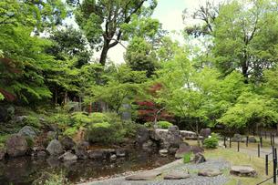 緑豊かな日本庭園の写真素材 [FYI03151125]
