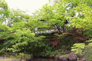 青もみじの日本庭園の写真素材 [FYI03151126]