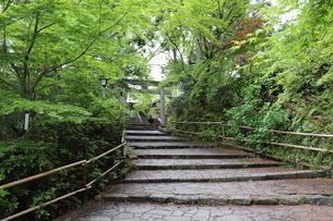 青もみじの参道の写真素材 [FYI03151127]