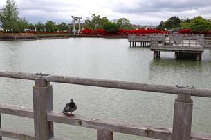 水上から眺める赤い参道の写真素材 [FYI03151139]
