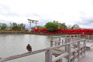 京都・長岡天満宮の八条ヶ池の写真素材 [FYI03151140]