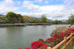 池のほとりに咲くキリシマツツジの写真素材 [FYI03151141]