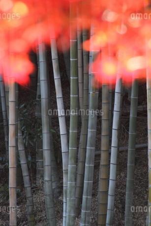 紅葉と竹林の写真素材 [FYI03151216]