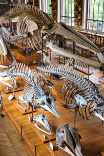 パリの国立自然史博物館の写真素材 [FYI03151427]