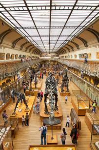 パリの国立自然史博物館の写真素材 [FYI03151428]