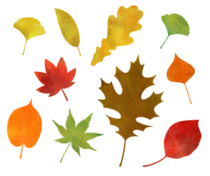 秋の紅葉アイコン(水彩色鉛筆)のイラスト素材 [FYI03151741]