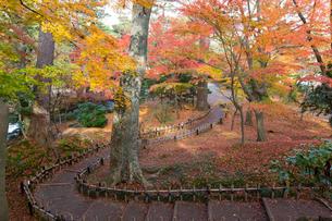 紅葉が美しい秋の兼六園の写真素材 [FYI03151913]