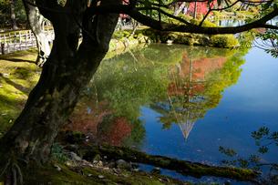 紅葉が美しい秋の兼六園の写真素材 [FYI03151924]