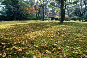 紅葉が美しい秋の兼六園の落ち葉の写真素材 [FYI03151928]