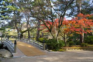 紅葉が美しい秋の兼六園の落ち葉の写真素材 [FYI03151930]