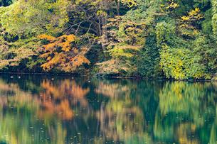 鏡面が美しい紅葉の蛇ヶ池の写真素材 [FYI03151962]