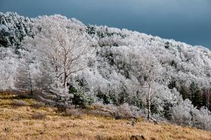 霧氷の蓼科高原の写真素材 [FYI03152095]