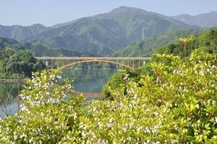 ドウダンツツジ咲く春の宮ヶ瀬湖の写真素材 [FYI03152122]