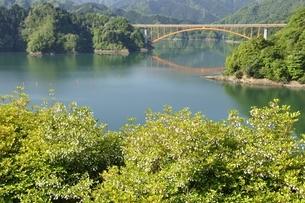 ドウダンツツジ咲く春の宮ヶ瀬湖の写真素材 [FYI03152125]