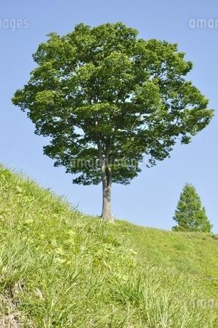 木立ちの写真素材 [FYI03152141]