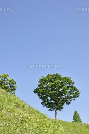 木立ちの写真素材 [FYI03152142]