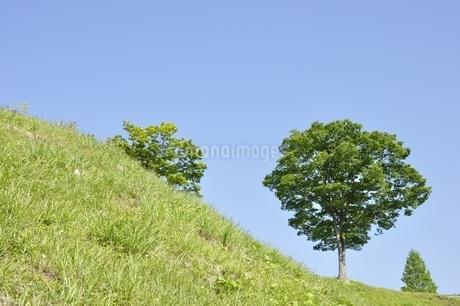 木立ちの写真素材 [FYI03152144]