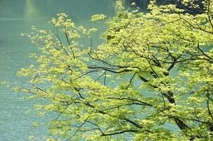 渓谷の新緑木立ちの写真素材 [FYI03152190]