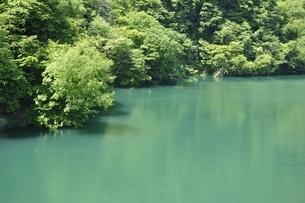新緑の石小屋湖の写真素材 [FYI03152200]