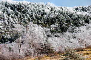 霧氷の蓼科高原の写真素材 [FYI03152372]
