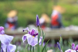 菖蒲園の写真素材 [FYI03152442]