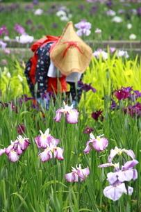 菖蒲園の写真素材 [FYI03152443]