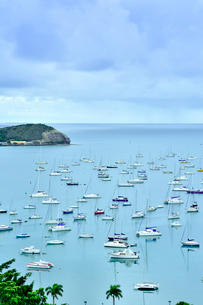 ニューカレドニア・ヌメアのオルフェリナ湾に浮かぶ沢山のヨット等の船舶とヤシの木の写真素材 [FYI03152607]