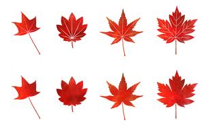 秋のもみじセット (水彩色鉛筆)の写真素材 [FYI03152641]