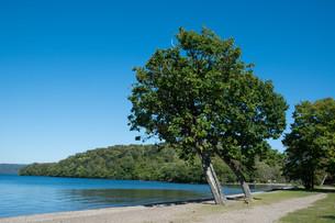 青い静かな湖と湖畔の木 屈斜路湖の写真素材 [FYI03152771]