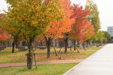 色づいた秋の街路樹の写真素材 [FYI03152774]