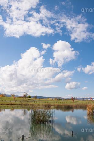公園の池に映る秋の青空の写真素材 [FYI03152780]
