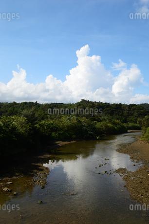 沖縄の田舎の川の写真素材 [FYI03152835]