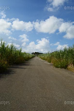 サトウキビ畑を通る直線の道の写真素材 [FYI03152844]
