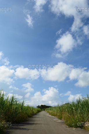 サトウキビ畑を通る直線の道の写真素材 [FYI03152852]