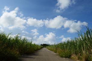 サトウキビ畑を通る直線の道の写真素材 [FYI03152854]
