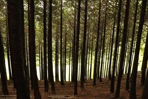 森の外の朝日の写真素材 [FYI03152921]