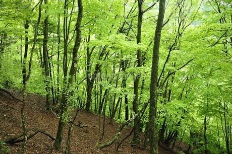 新緑の森の写真素材 [FYI03152924]