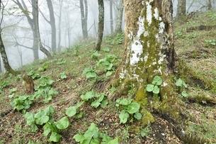 森に芽生えた春の息吹の写真素材 [FYI03152948]