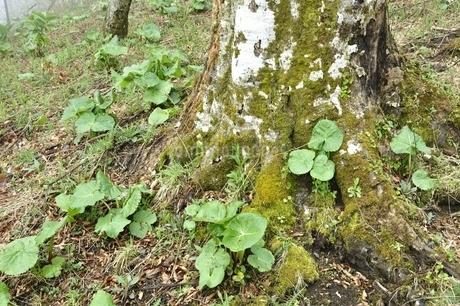 森に芽生えた春の息吹の写真素材 [FYI03152949]