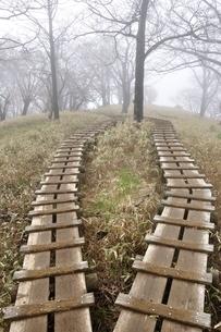 山霧の道 丹沢主脈の木道の写真素材 [FYI03152968]