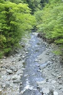 新緑の頃の本谷川の写真素材 [FYI03153031]