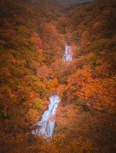 霧降りの滝 日本 神奈川県 平塚市の写真素材 [FYI03153075]