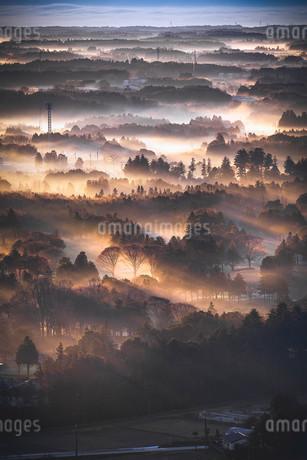 三ツ石森林公園 日本 茨城県 かすみがうら市の写真素材 [FYI03153173]