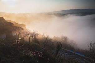 月ヶ瀬梅林 日本 奈良県 奈良市の写真素材 [FYI03153178]