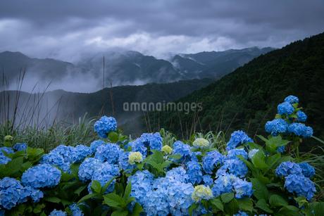 アジサイ 山 風景の写真素材 [FYI03153186]